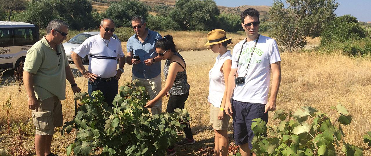 Garalis-Vineyards-2